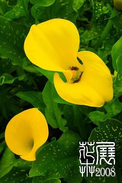 花卉展11.jpg