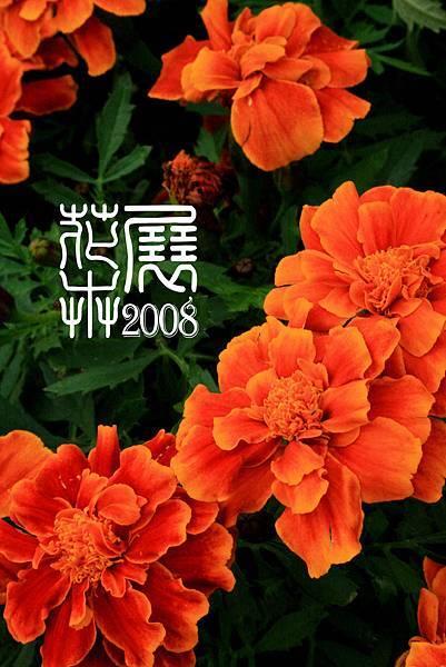 花卉展13.jpg