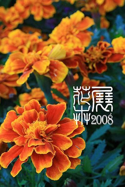 花卉展17.jpg