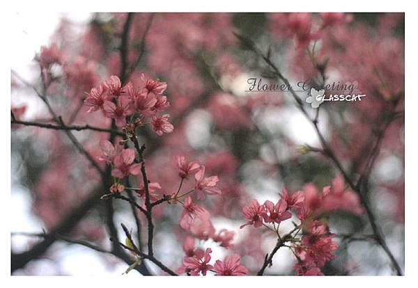 FlowerGreeting06.jpg