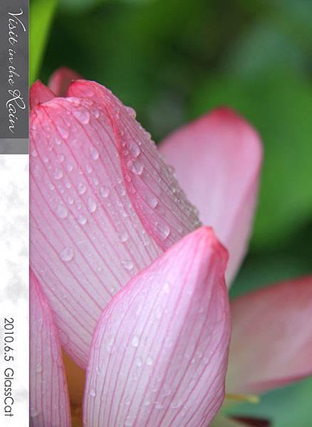 雨裡訪花07.jpg