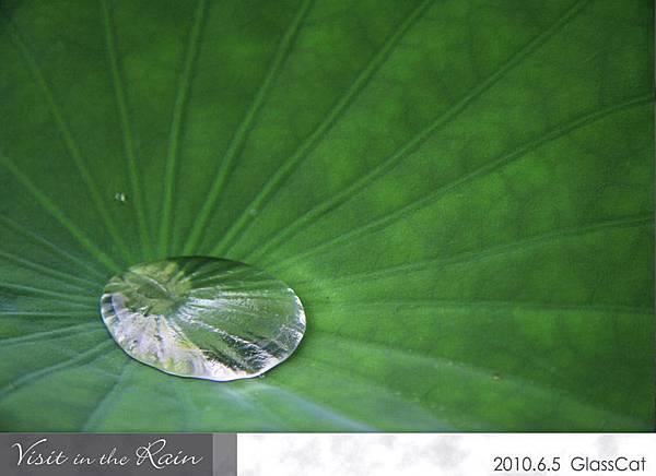 雨裡訪花10.jpg