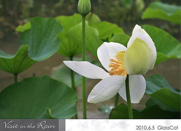 雨裡訪花12.jpg