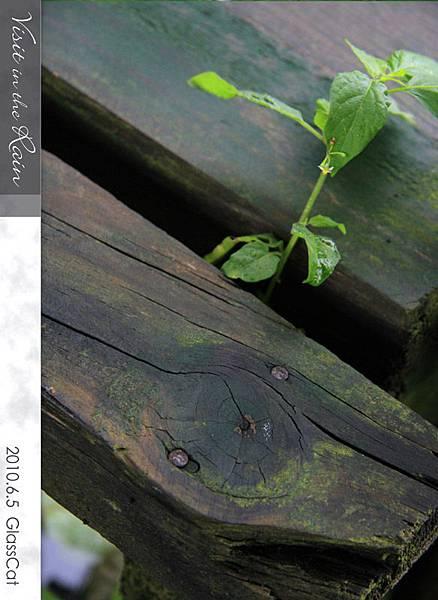 雨裡訪花16.jpg