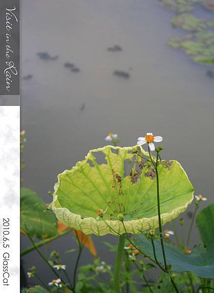 雨裡訪花17.jpg
