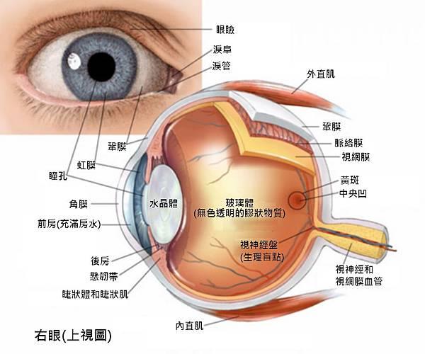 眼球2.jpg