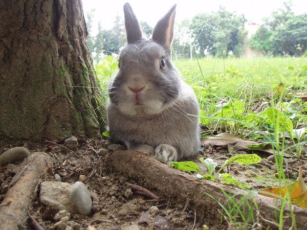 太熱了..躲在樹下