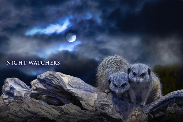 NIGHTWATCHERS.jpg