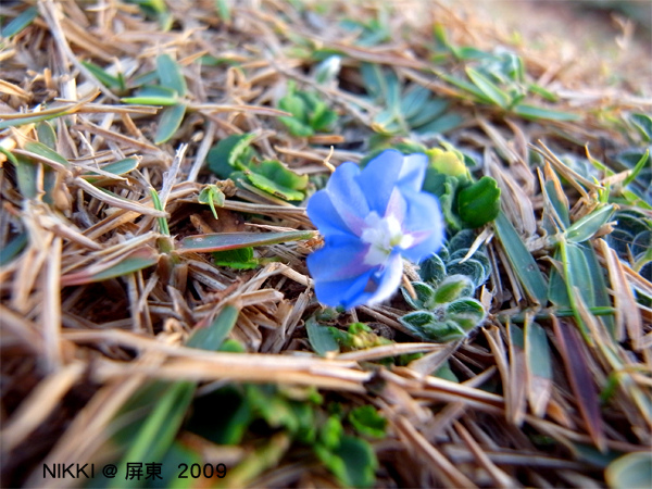 在海邊生長的花朵.jpg