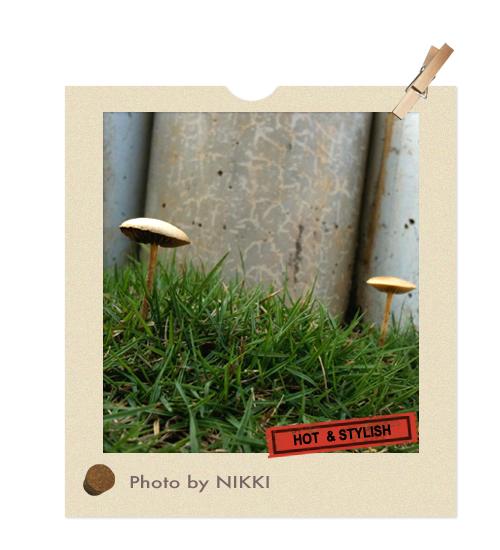 雨後的小草菇.jpg