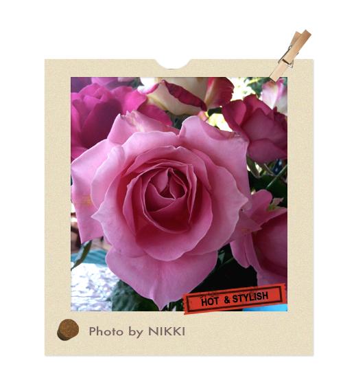 山形玫瑰.jpg