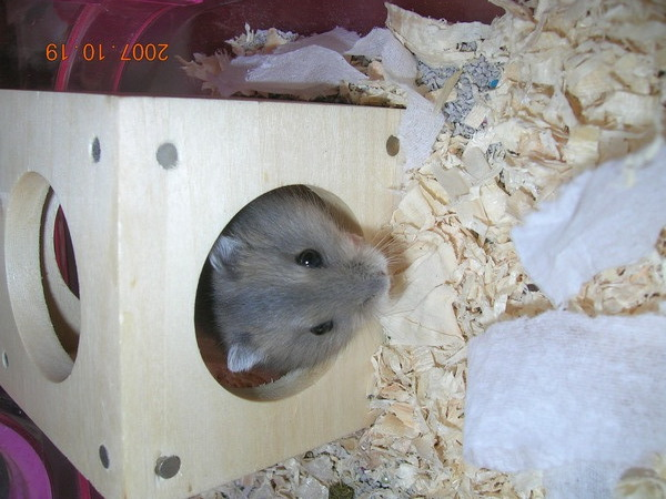 鼠4.JPG