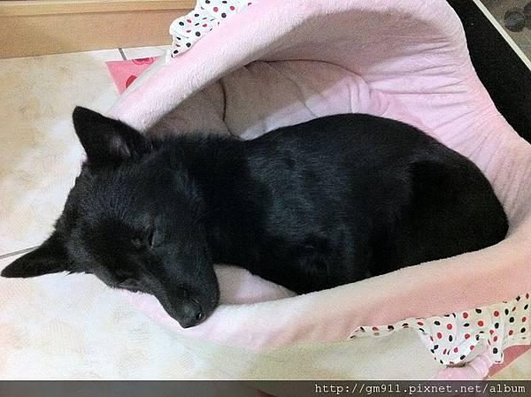 喜歡新床嗎