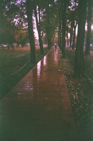 森林步道?