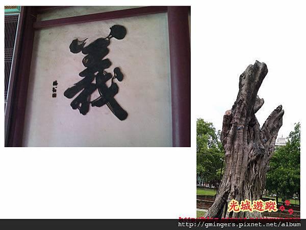 老榕樹與義.jpg