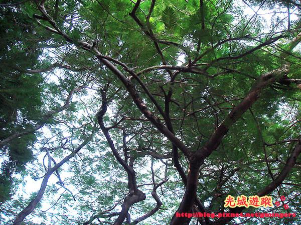 我喜歡的樹下景色.jpg