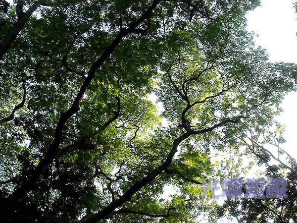 樹蔭.jpg