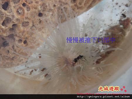 吃螞蟻-2.jpg