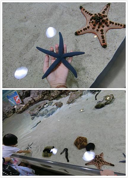 日本沖繩 海洋博物館-6.jpg