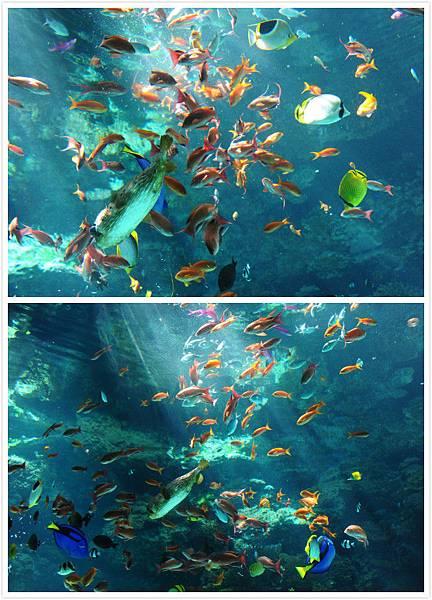日本沖繩 海洋博物館-8.jpg