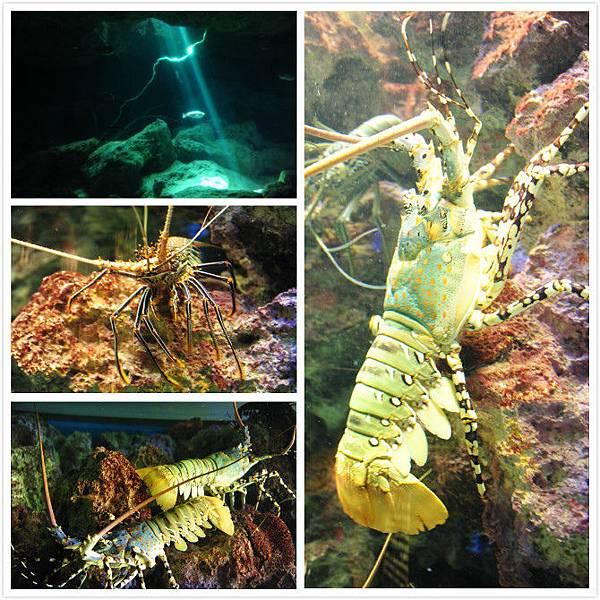 日本沖繩 海洋博物館-10.jpg