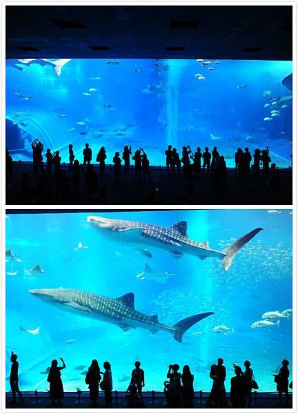 日本沖繩 海洋博物館-11.jpg