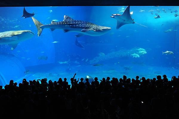 日本沖繩 海洋博物館-12.JPG
