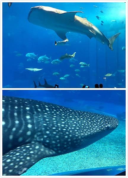 日本沖繩 海洋博物館-13.1.jpg