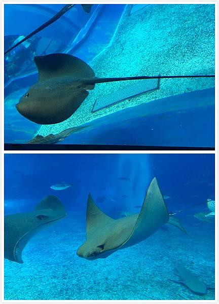 日本沖繩 海洋博物館-13.jpg