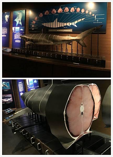 日本沖繩 海洋博物館-15.jpg