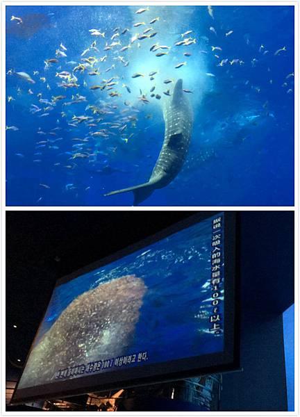 日本沖繩 海洋博物館-16.jpg