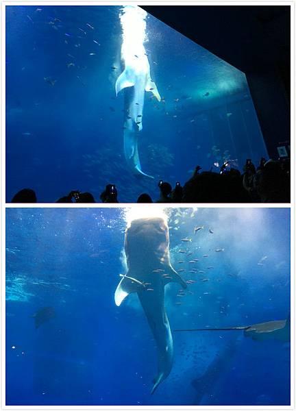 日本沖繩 海洋博物館-17.jpg