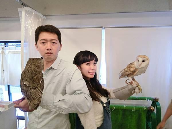 大阪貓頭鷹咖啡廳-1.JPG