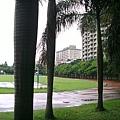 泳池外綠意盎然的草皮,有著淡淡的青草香