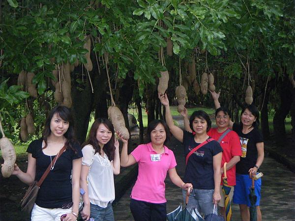 這是什麼樹呢?結出來的果實好怪唷!