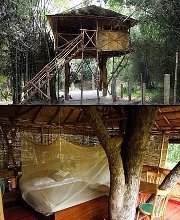 樹旅館-印度