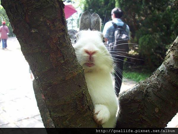 我是松鼠.jpg