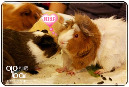 kiss貝克漢....jpg