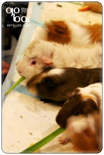 小小豬吃草.jpg