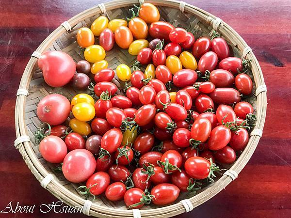 番茄-7.JPG