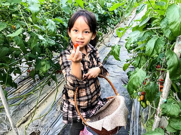 番茄-11.JPG
