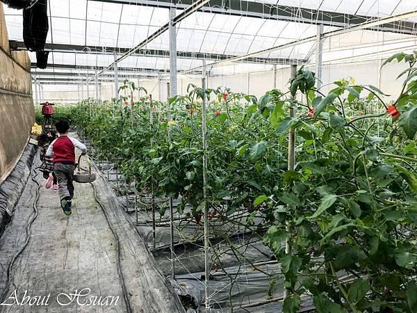 番茄-14.JPG