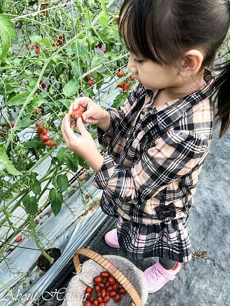 番茄-23.JPG