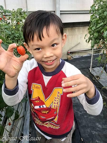 番茄-24.JPG
