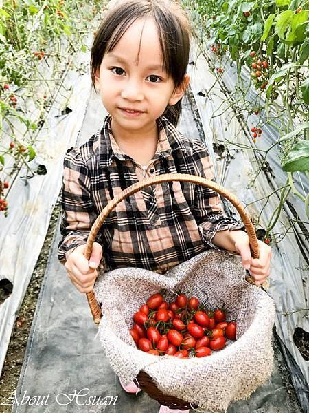 番茄-31.JPG