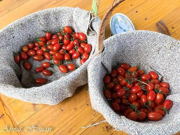 番茄-35.JPG