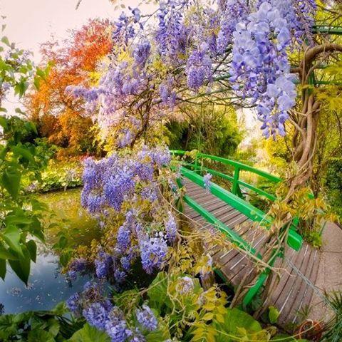 莫內花園 Jardins de Monet.jpg