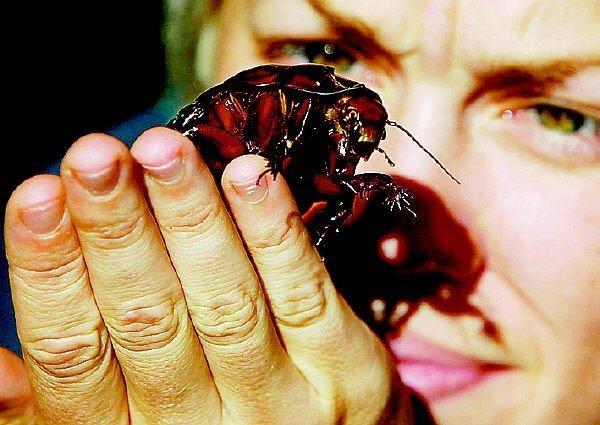 蟑螂.bmp