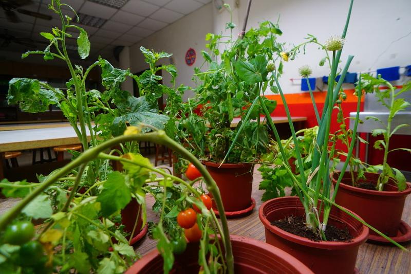 菜園教室01.JPG