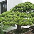 71盆栽.j